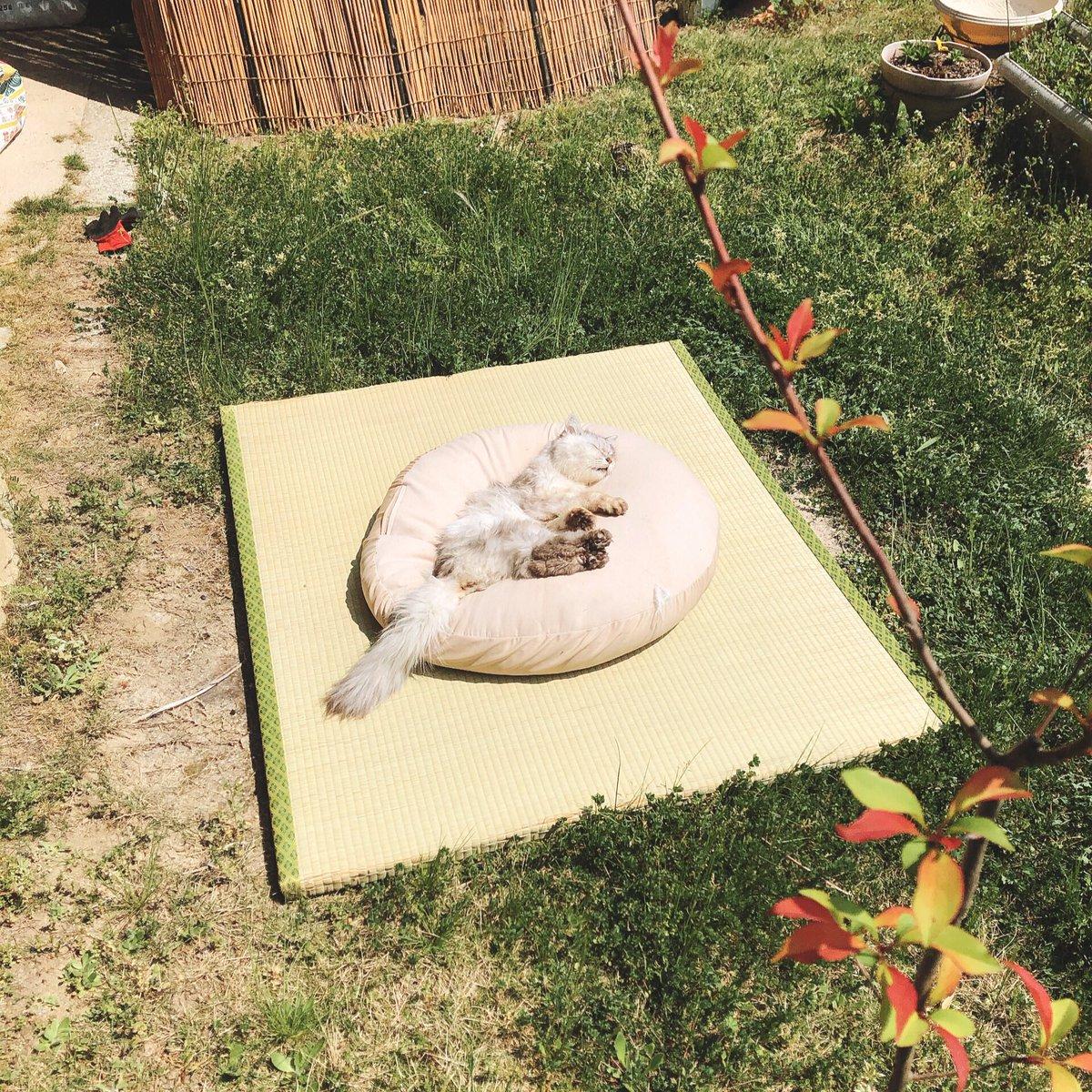 庭に設けた猫の特等席です