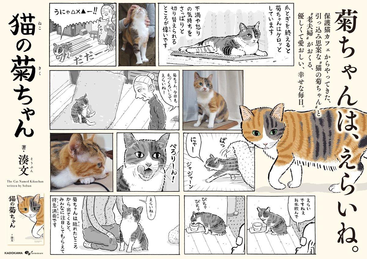 外出自粛中ではありますが、とても素敵な本屋さん用のパネルとポスターを作っていただきました。このような時期に申し訳ないです。私たちもみんなでお家にいます。どうか本屋さんでお目にかかれる日が1日も早く来ますように。 #猫の菊ちゃん