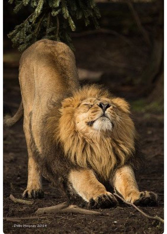 Hard before morning coffee !! #photos #lions #animals #coffee #morningpic.twitter.com/g91QuYOKuv