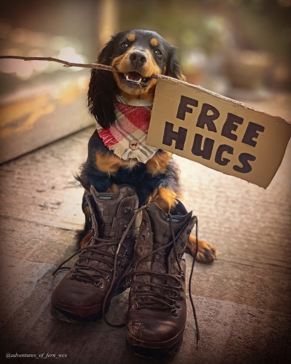 Free hugs available #ThisMorning to cheer you all up.  #spaniel #dogoftwitter #dogsofinstagram #puppy #puppylove #puppylife #hugs #QuarantineLife #BeKind #love #FirstTweet   @thismorningpic.twitter.com/uMXeLUFCq1