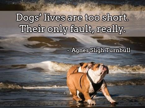 Dogs' lives are too short. Their only fault, really. Agnes Sligh Turnbull   #puppy #doglovepic.twitter.com/7TCGR7n3YM