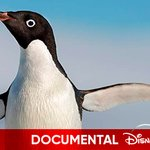 Image for the Tweet beginning: Disneynature presenta la historia de