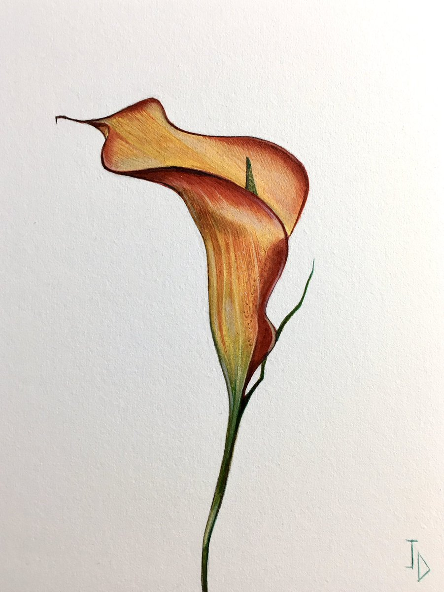 Original flowers Lillie no 50. Watercolour on arches paper 19 x 14 cm. non surreal things JDavies artworks #painting #art #watercolour #contemporary arts #acrylic #art Gallerists #surrealism #graffiti #drawing #artist #watercolour paper #canvas #flowers #brushes #modern #linenpic.twitter.com/cw1nae7u31