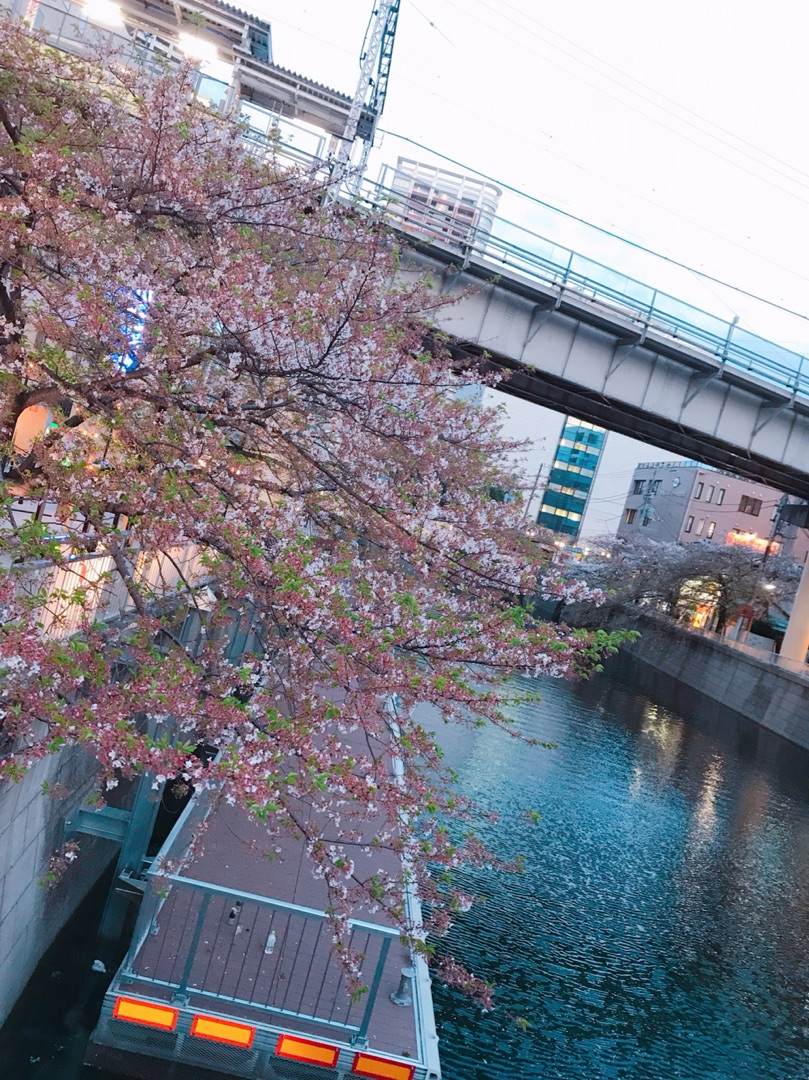 #五反田 #池上線 #街の風景 #写真 #こんばんは #目黒川 #桜の季節 #人少ない ー アメブロを更新しました#MIYA#池上線