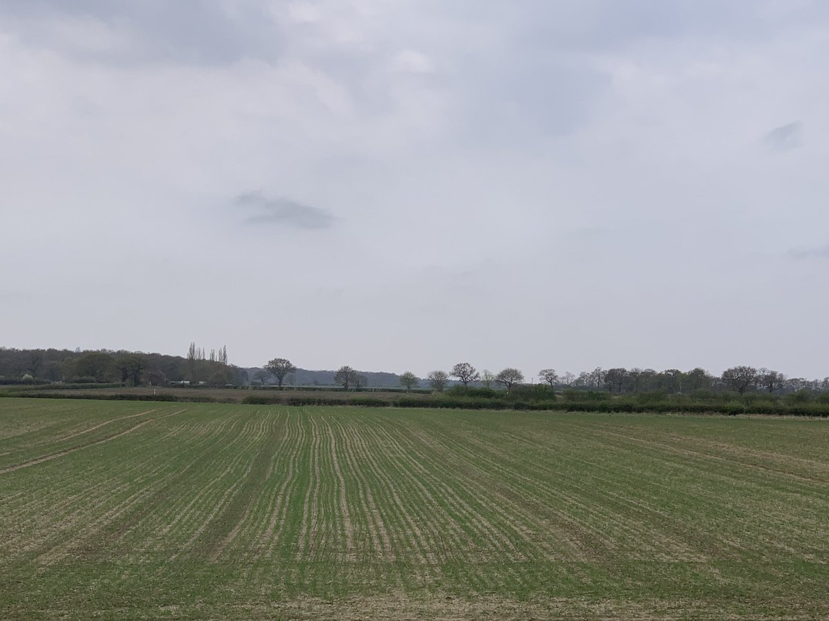 Delighted to see how my February drilled winter wheat is looking, when you think what the field looked like in November. #Springthorpe #Lincolnshire #OpGalileo  <br>http://pic.twitter.com/WCiV5zgXNV