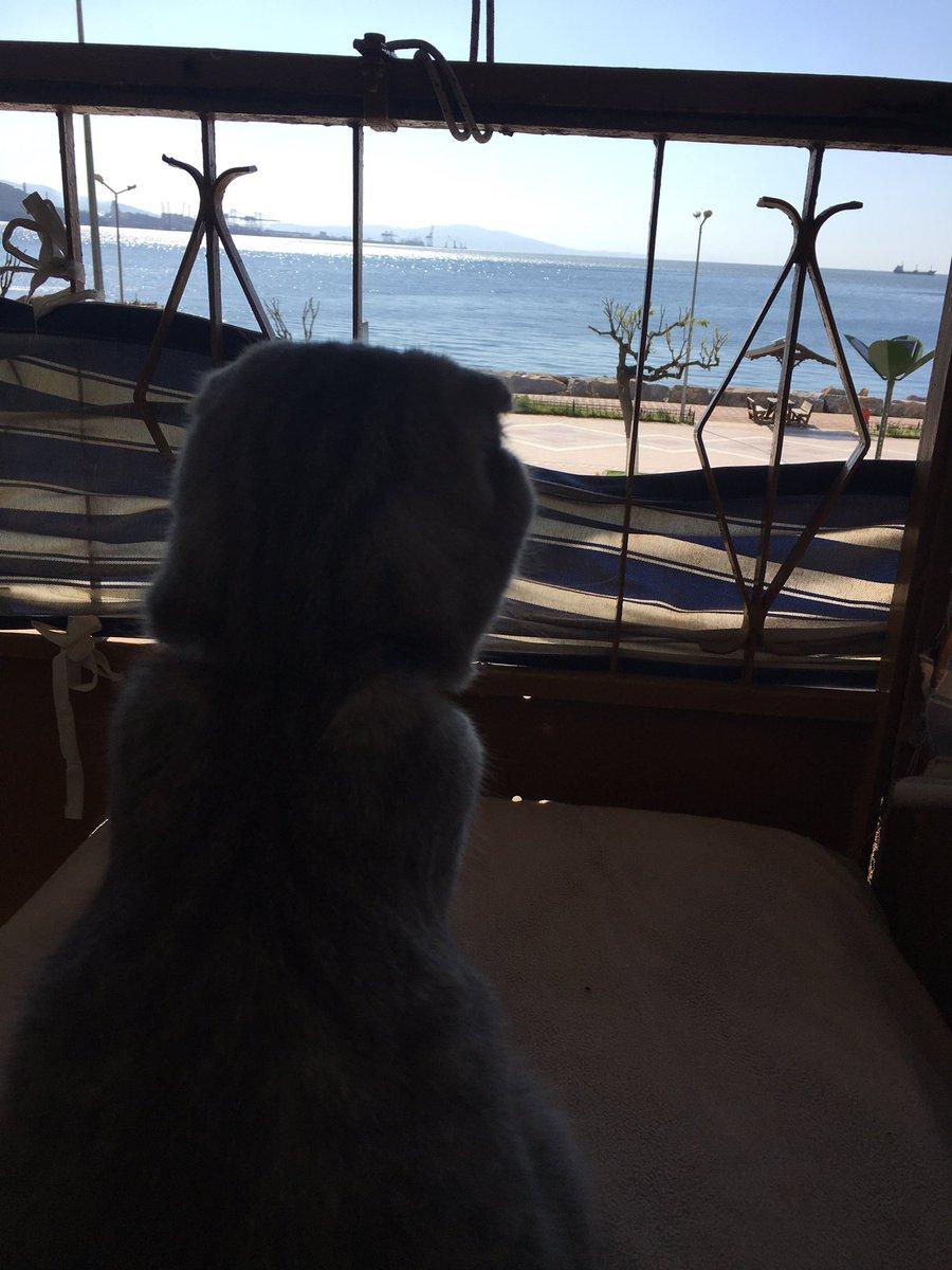 Benim şöyle denize karşı pozum yok Allahın kedisiii #catloversclub #catspic.twitter.com/nAPEC5V1Ms