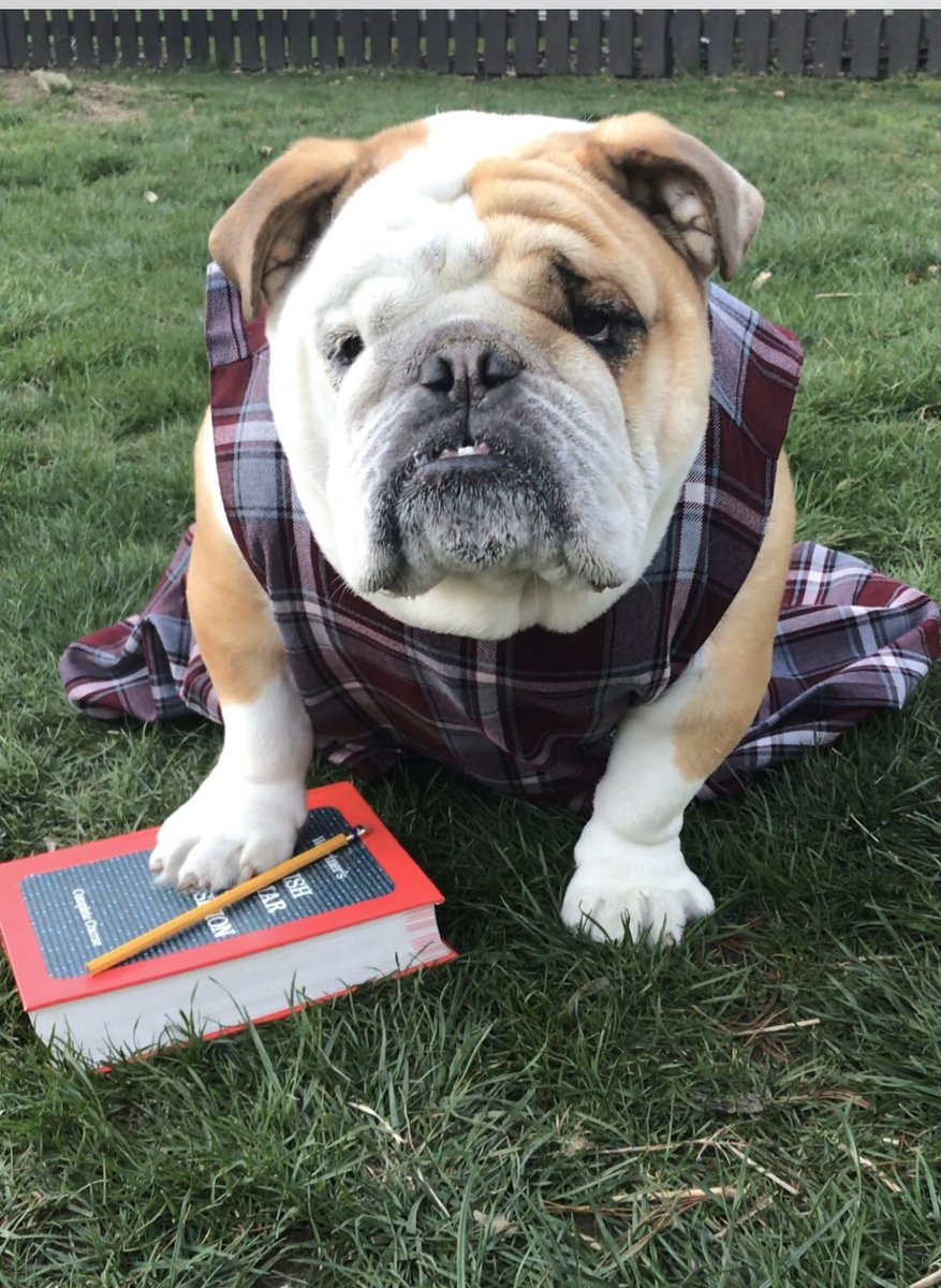 Day whatever of quarantine and the kids have resorted to making me their classmate to ease the grading curve #englishbulldog #bulldogsofinstagram #dogs #school #homeschoolpic.twitter.com/qaDKLS6wYB