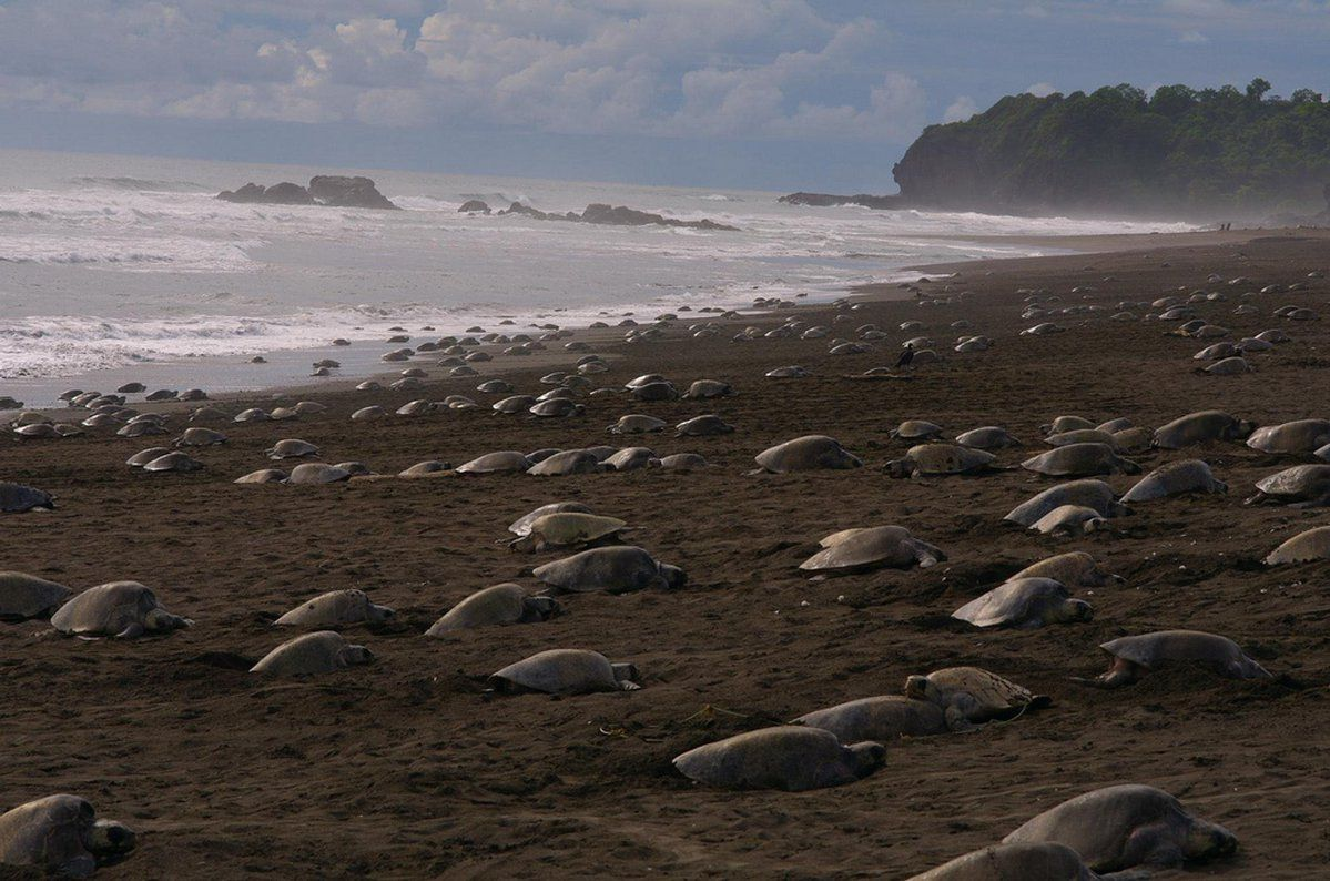 GOOD NEWS! #SaveOurSpecies 70,000 Endangered Sea Turtles Lay Eggs on Empty Beaches During Quarantine https://returntonow.net/2020/04/08/70000-endangered-sea-turtles-lay-eggs-on-empty-beaches-during-quarantine/ …