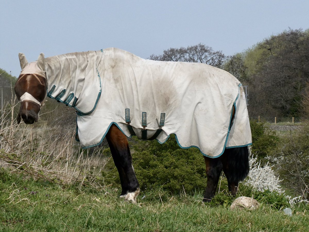 Interesting outfit this #horse was sporting on our walk today. Bet it had warm ears! pic.twitter.com/wCtjCRoag6
