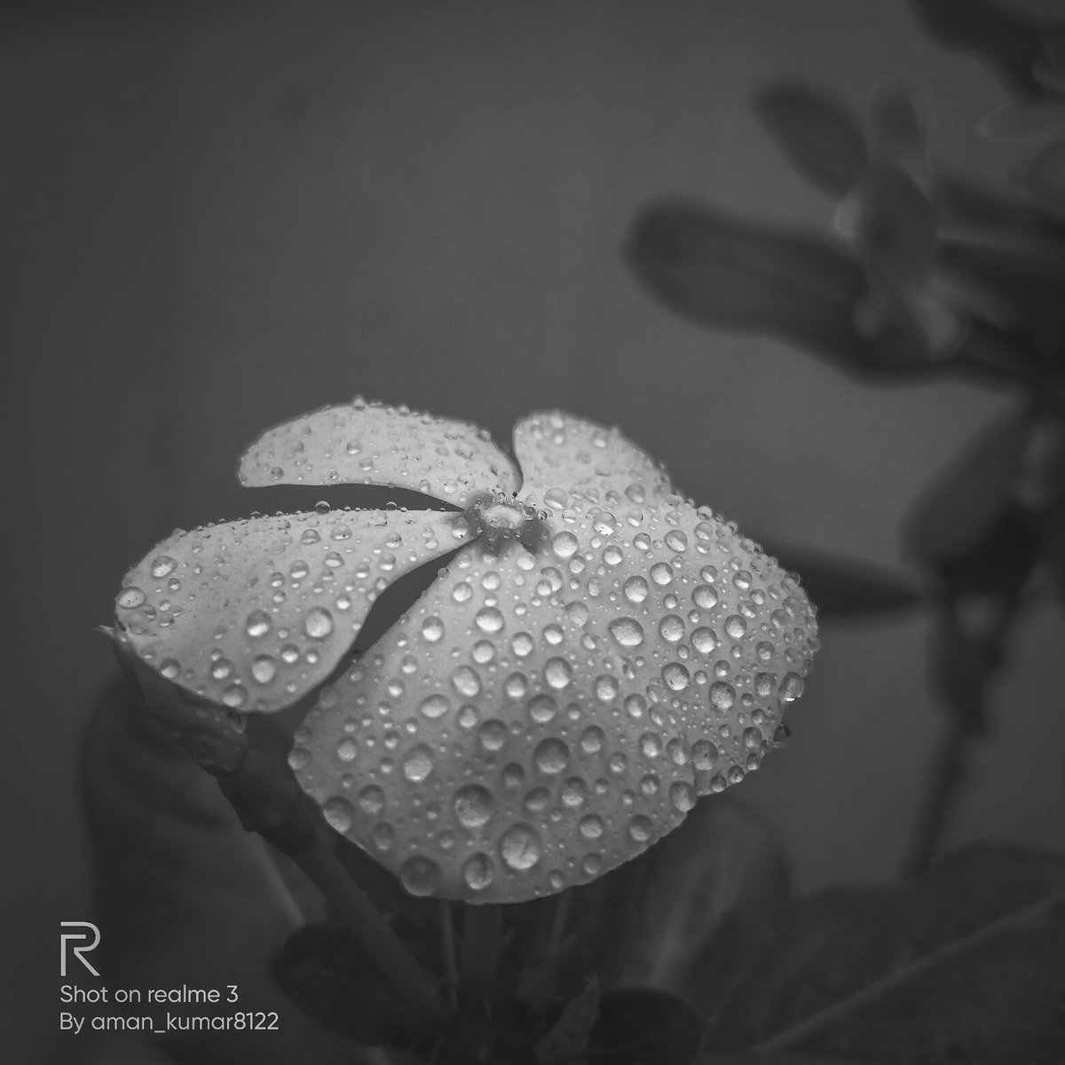 THE SHADES OF GREY. #Flowers #flowerphotography #flowerstagram #flower #2020 #photography #photo #photocontest #Photos #PhotoOfTheDay #Photoshoot #photographer #photographylovers #quotes #blackandwhite #blackandwhitephoto #blackandwhitephotography #like