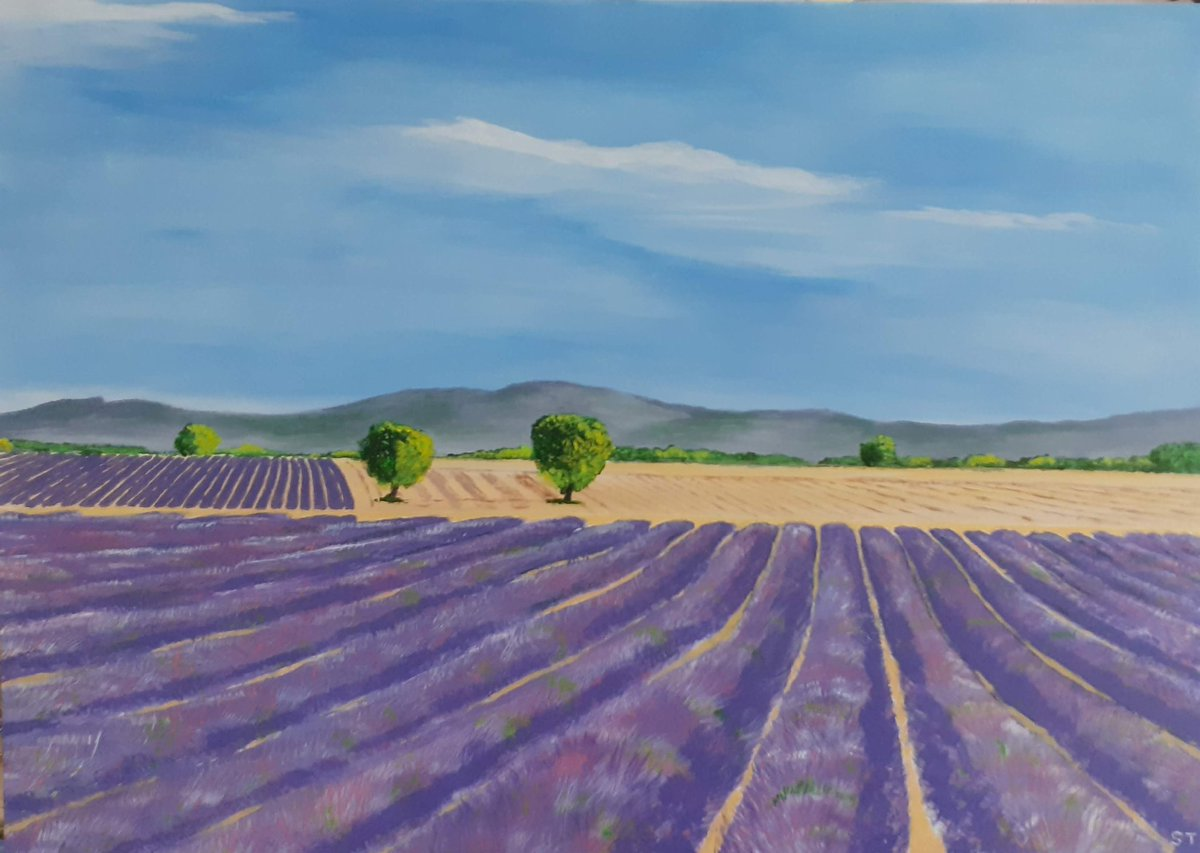 Don't normally do landscapes but as I had one small board left I thought I would give this a go. A lion commission after this. Lavender in France. Acrylics on board.