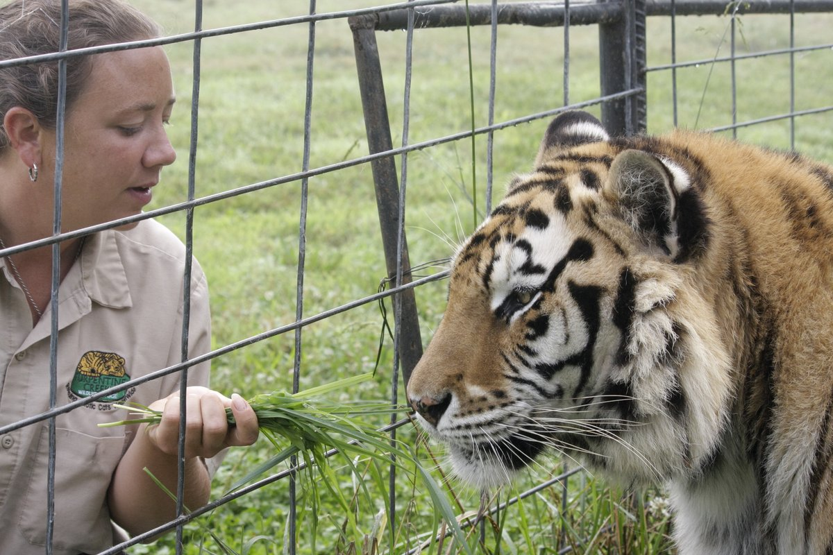 Is Joe Exotic GUILTY? What REALLY happened to Carole Baskins husband? Watch TMZ Investigates: Tiger King - What Really Went Down? Premieres Monday April 13th @ 9/8c on @FOXTV