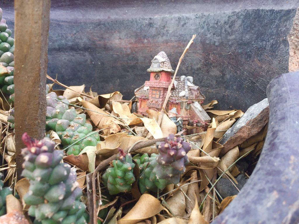 En uno de los caminos que recorro con mis perros hay macetas y descubrí que una de ellas tiene una casita en miniatura en medio de hojas secas y cactus.   ¡Me encantan las miniaturas escondidas!  #Miniatures #DogWalkpic.twitter.com/IKgHDaBF6z