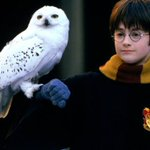 Image for the Tweet beginning: Harry Potter se queda en