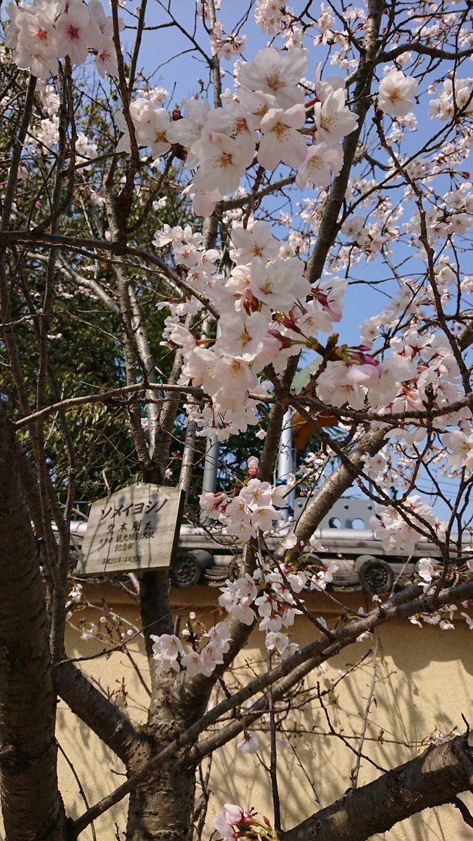 家で外出自粛してても、沢山の桜、沢山のイラスト、画像、沢山の素敵な言葉を共有できているよ。剛くんの誕生日はいつも暖かい気持ちに包まれているよね。 #堂本剛41回目誕生祭 #堂本剛さんのお誕生日を祝う桜祭pic.twitter.com/7efFAFmZMc
