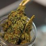 Image for the Tweet beginning: #CBD #THC #marijuana First-in-Colorado medical