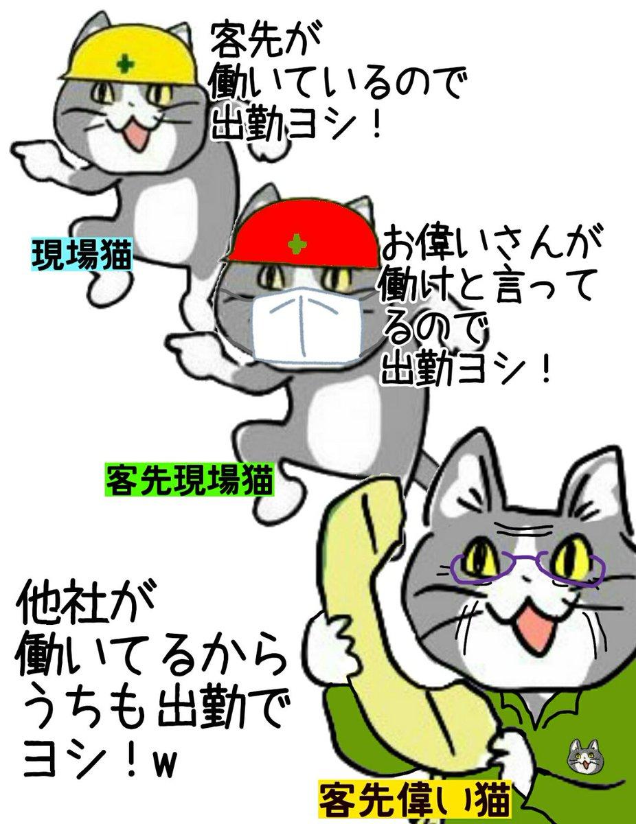 現場 猫 トリプル チェック