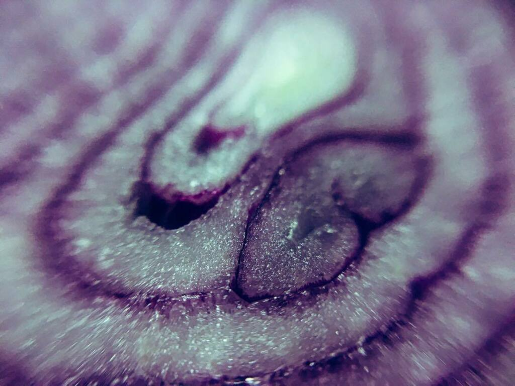 #macro #macrophotography #macro_captures_ #macrofotografia #macro_vision #macro_world #macro_drama #macro_addiction #macro_freaks #nature #naturephotography #naturelovers #nature_perfection #nature_good #nature_of_our_world #travel #travelphotography #on…