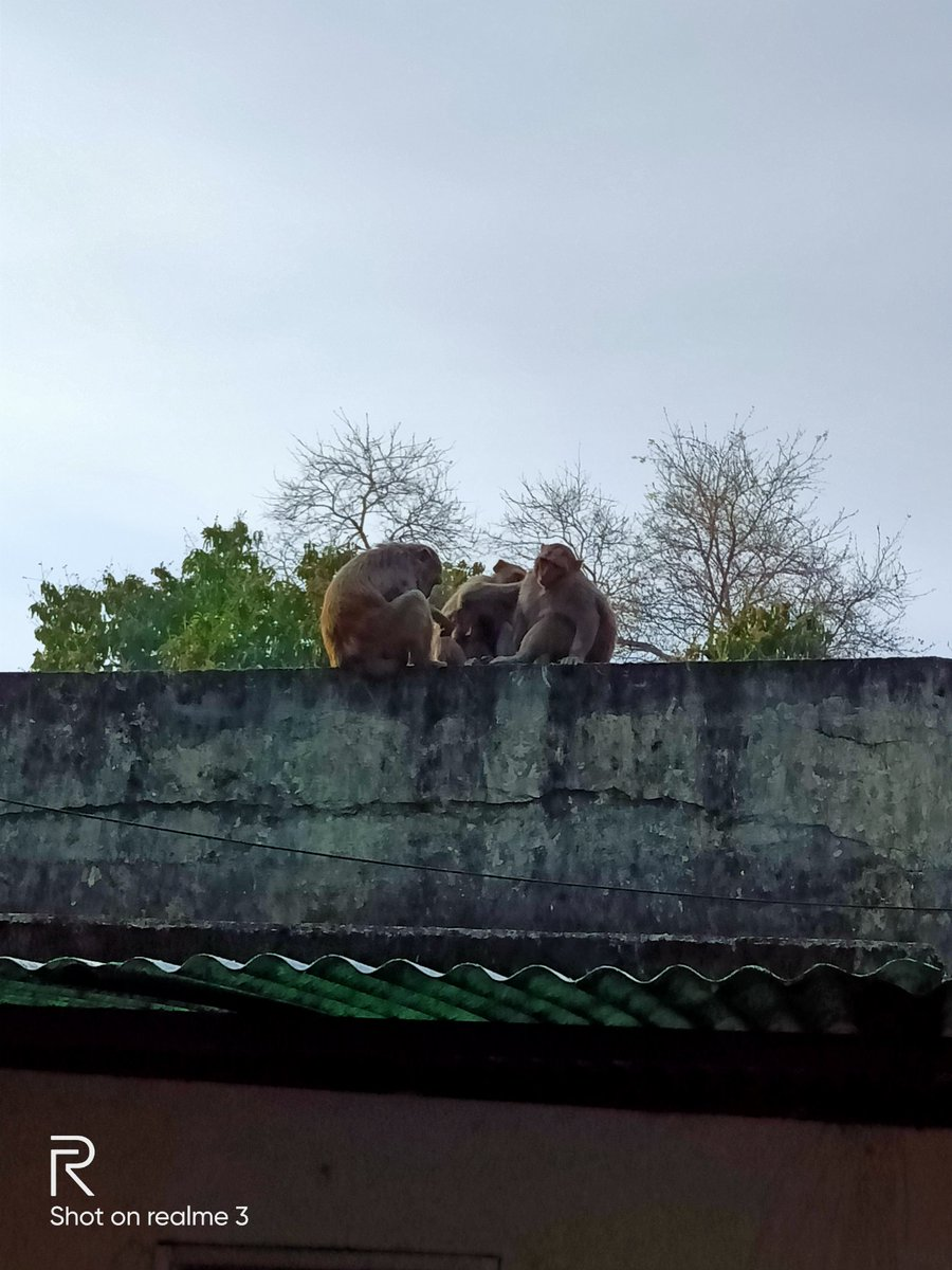 Even they are enjoying  time...  #Rooftoppers pic.twitter.com/6U78I2PVim