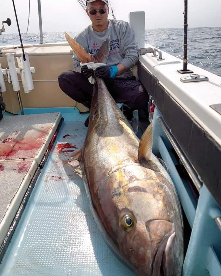いつもお世話になってる釣船「幸丸」さんで、193cm83.2kgの超特大カンパチが泳がせ釣りで揚がったようですJGFAオールタックル部門の記録では71.15kgが最大らしいのでそれを優に超えてますね〜夢があるなぁ✨