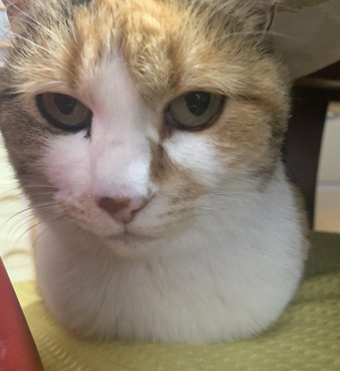 再生回数2万回超えました🙌猫使いマスター検定修行これからも頑張ります🙏おかみさん、猫使いマスター検定を受ける。  @YouTubeより