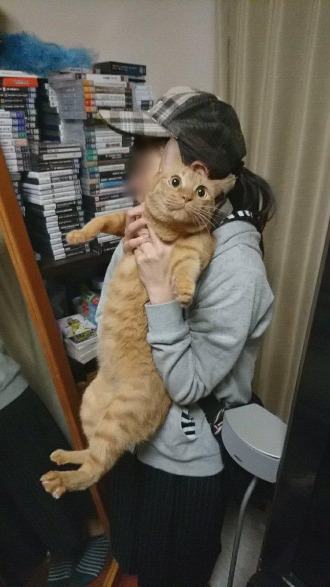 うちの猫がマネージャーさんに捕まった時に出す絶望感。#猫伸ばしチャレンジ
