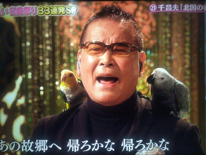 千 昌夫 インコ