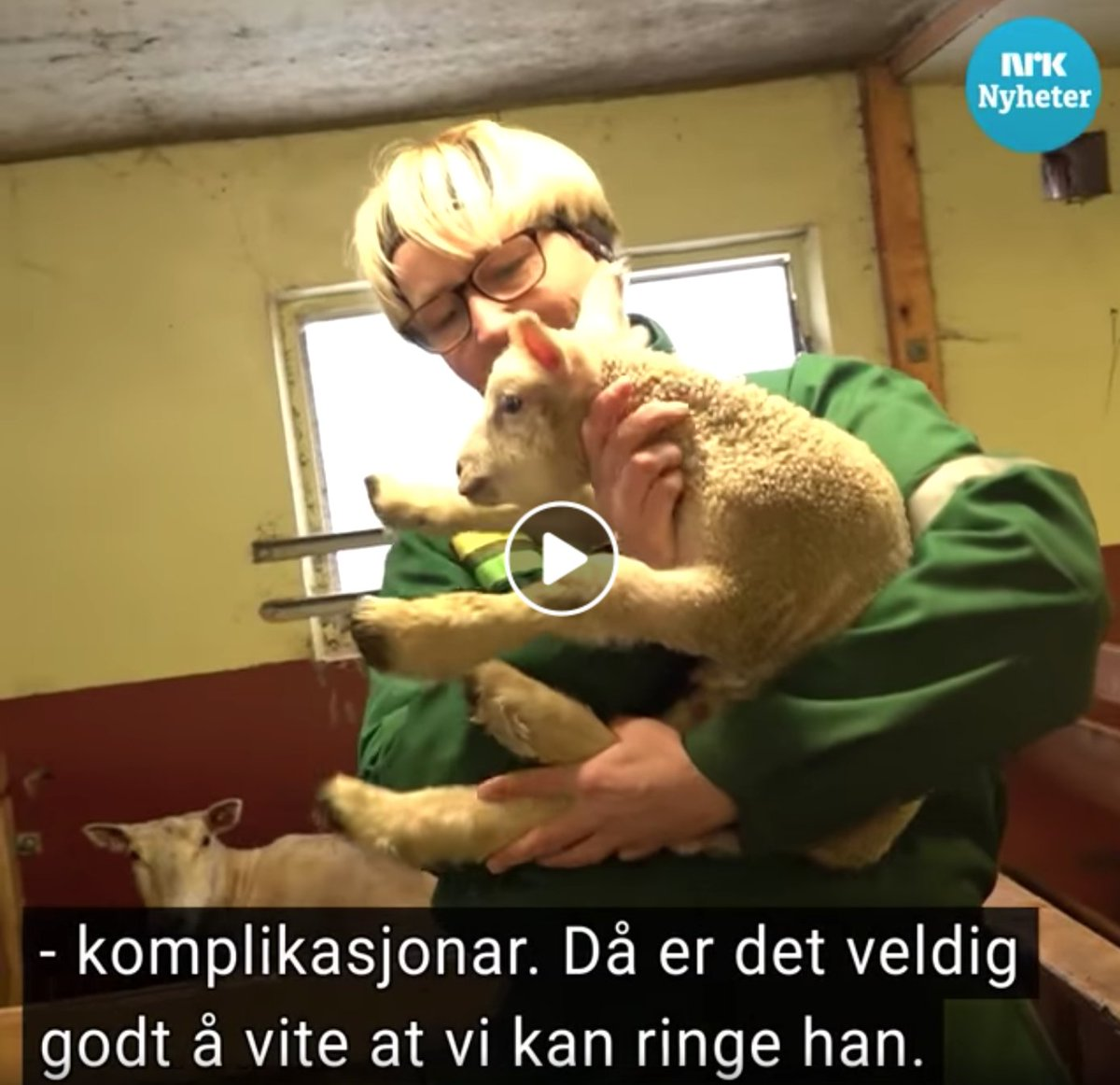 A wonderful story about lambing in #lockdown. This Norwegian farmer couldnt leave his care home to attend lambing season this year. Using #KOMP video call, the farmer could take part in his favourite time of year, and remotely helped deliver the newborns: facebook.com/68272763593/po…