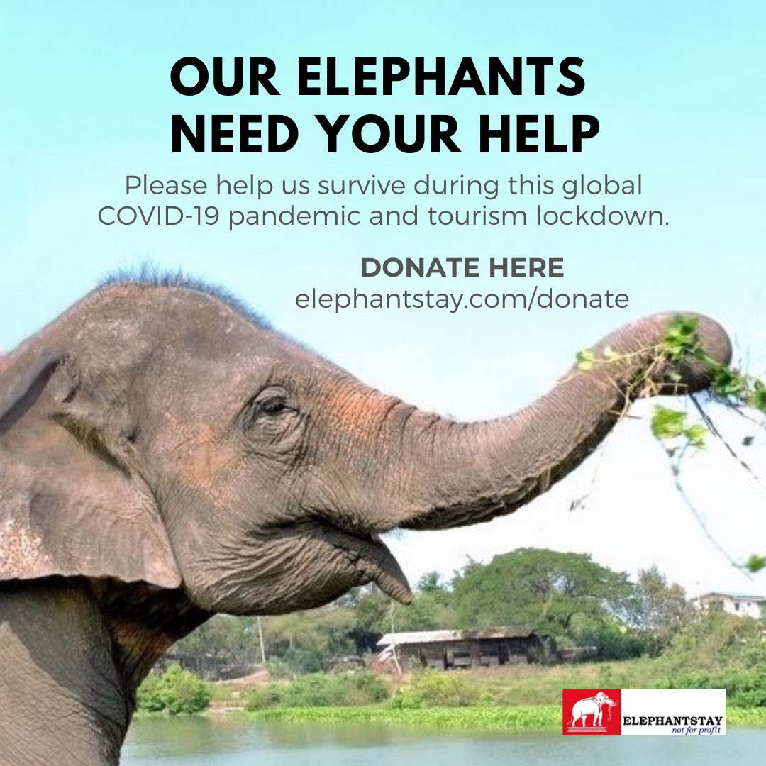Help us survive during this #COVID19 pandemic and tourism lockdown. Our elephants need you now more than ever. https://t.co/gPQSFdXjwg https://t.co/UuGV6RSi4I
