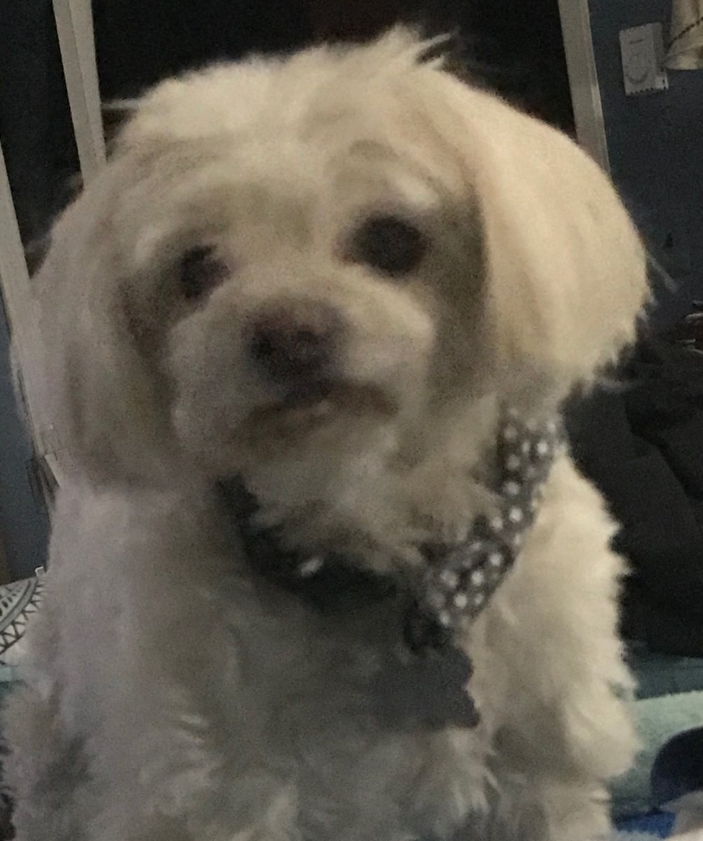 Important information about your pets and COVID-19. Mr. Butters suggests you check it out.  #pawsitivity #dogs #cats https://t.co/fVzOz4c41D