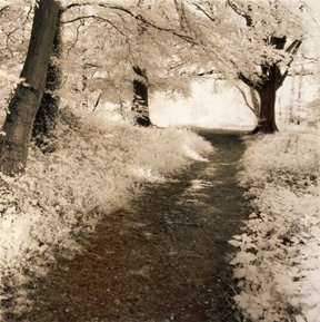 As none of us can get out, here is a glimpse of a spring from earlier times. This is Peters infrared shot, The Roman Way, taken along Stane Street, just outside Chichester in Sussex. #infrared #sussex #romanroads #stanestreet