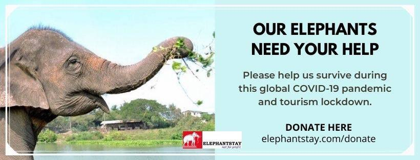 Donations needed for our elephants. Help us get through this #covid19 pandemic and tourism lockdown https://t.co/P9MVvyqx1U