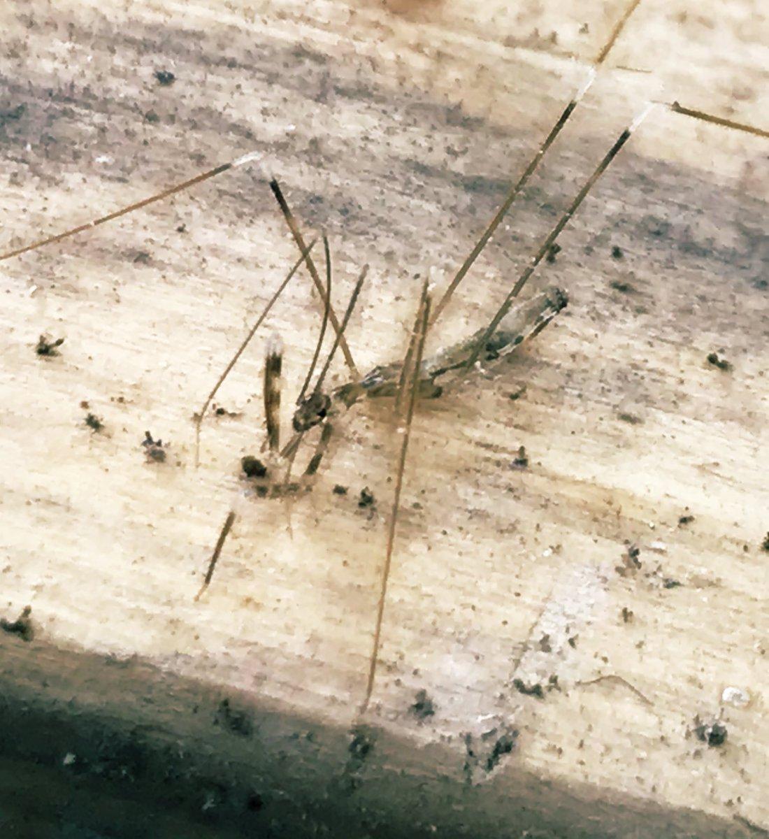 な 虫 みたい クモ