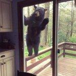 おーい、生きてるかー?外出自粛で人が少ないので様子を見に来た野生動物たち