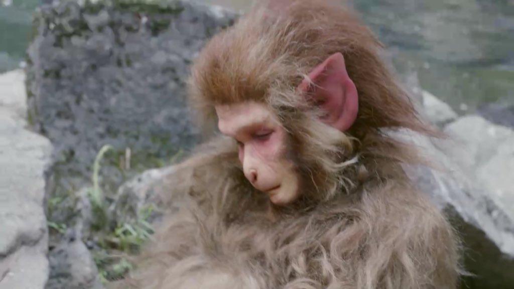 """냥표 on Twitter: """"의천도룡기2019 보는데 그 전에 보던게 신조협려2006이다보니 오 CG 훨씬 볼만하네 하면서 즐겁게  감상하고 있었는데.. 14화에 원숭이가 등장했고 너무나 언캐니 밸리에 빠진 모습이라 웃겨 죽을거 같다 ㅋㅋㅋ CG를 포기한건 상관없는데"""