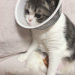 どん兵衛でネコがかなり落ち着く。エリザベスカーラーが苦手な場合は是非参考に!