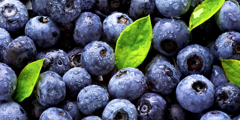 #DidYouKnow Blueberries are an excellent source of vitamin C, which helps protect cells against damage and aids in the absorption of iron. https://t.co/cEMyOI66Ml