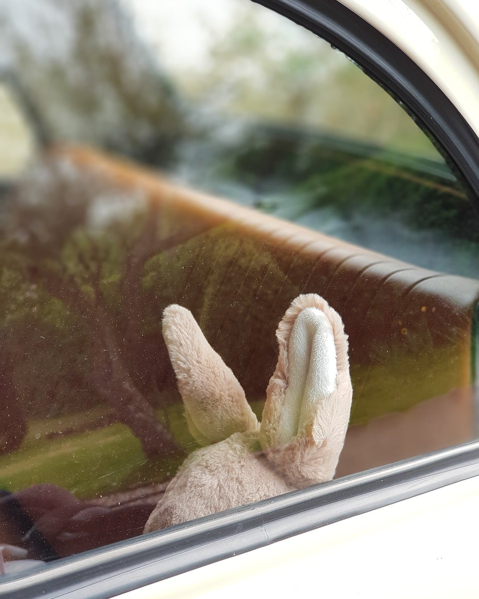 Somebody has made their way into the Fiat...😉  Happy Easter 🐰  #fiat500 https://t.co/oAQas2wA2d