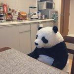 まるで家族??IKEAのパンダのぬいぐるみが存在感抜群で癒される!