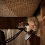 ソファーの下を覗いていたらでてきた猫!かなりびっくりした!