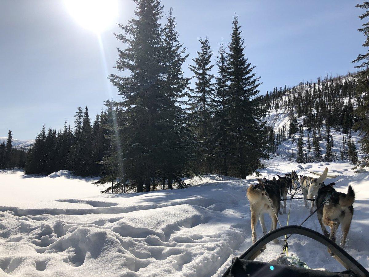 一昨日が、今冬最後の最高の雪質で犬ぞりの出来た1日となったようです。今日は8.5℃まで気温が上がり、雪はどんどん溶けています。渡り鳥もフェアバンクスに来始めたようです。アラスカ #チナ温泉リゾート #犬ぞり #春 #フェアバンクス #alaska #chenahotsprings #fairbanks #spring #雪解け https://t.co/tYhtOkl5oO