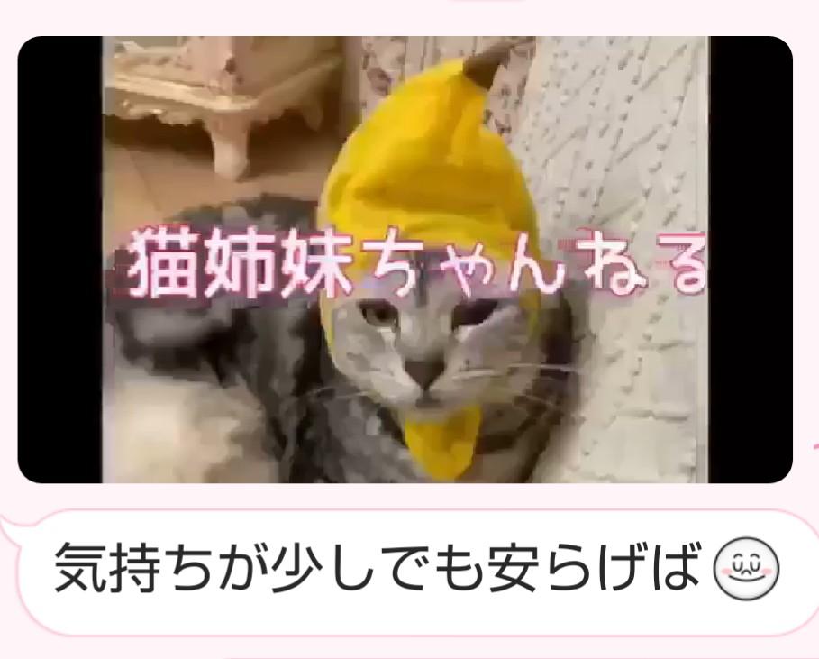 猫 姉妹 チャンネル
