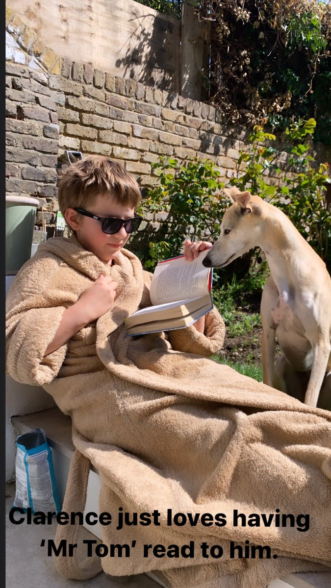 Clarence the Whippet loves a bit of 'Mr Tom' on a Tuesday afternoon during Coronavirus... https://t.co/qQDWinkDVJ
