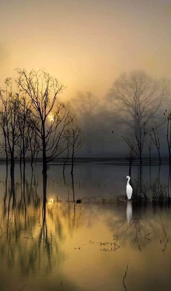"""Blue sign on Twitter: """"Artistic Image ChingYang Tung.… """""""
