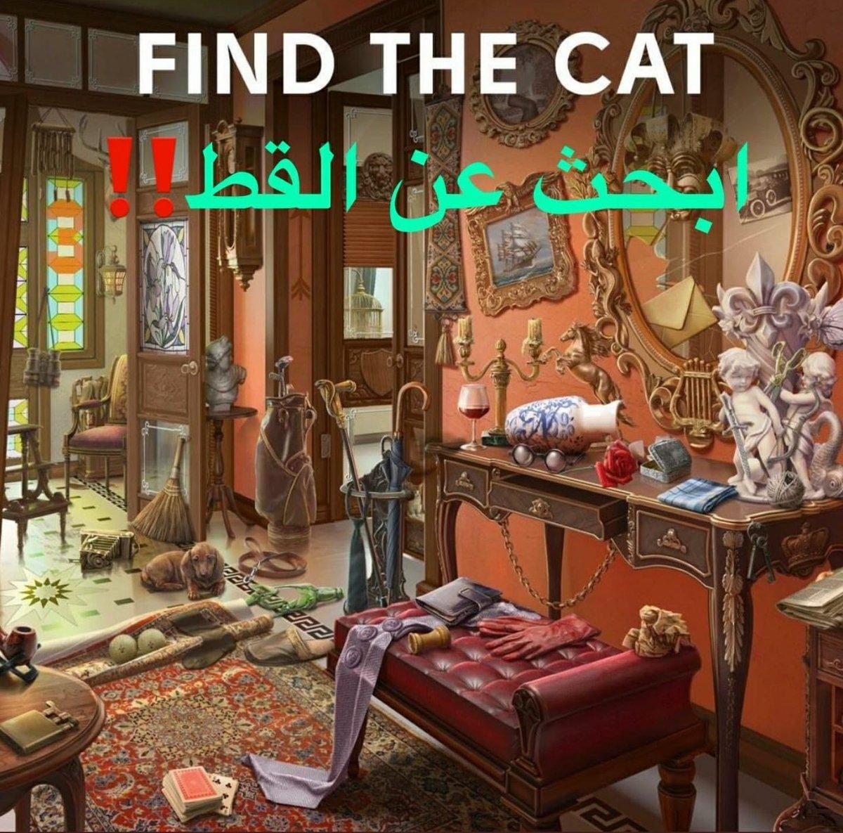 مشاري العازمي على تويتر لغز ابحث عن القط المهبوله