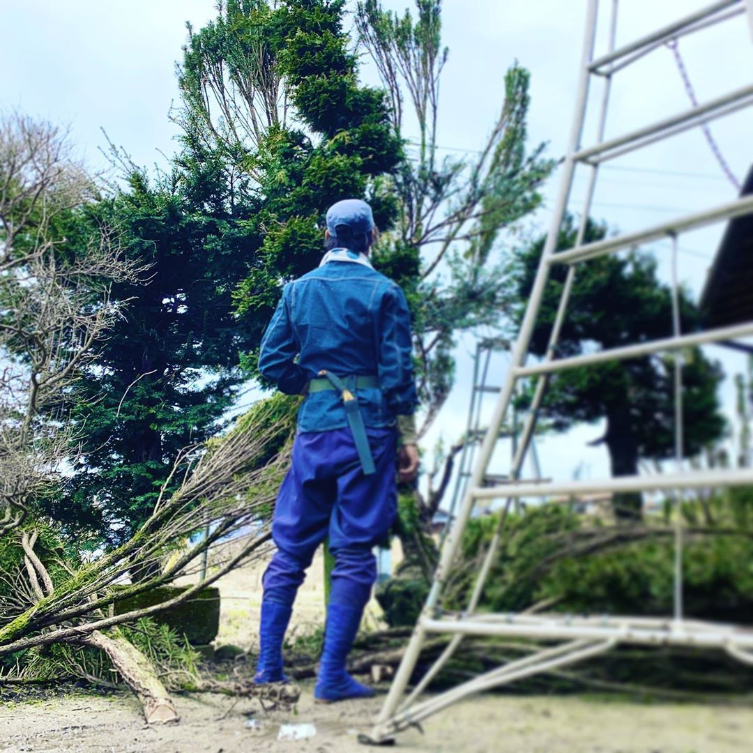Bonus: why do Japanese arborists (niwashi) and gadeners wear only natural blue dyed cotton? The dye in the cloth comes from a plant that is naturally insect repellant, keeping insects away without chemicals.