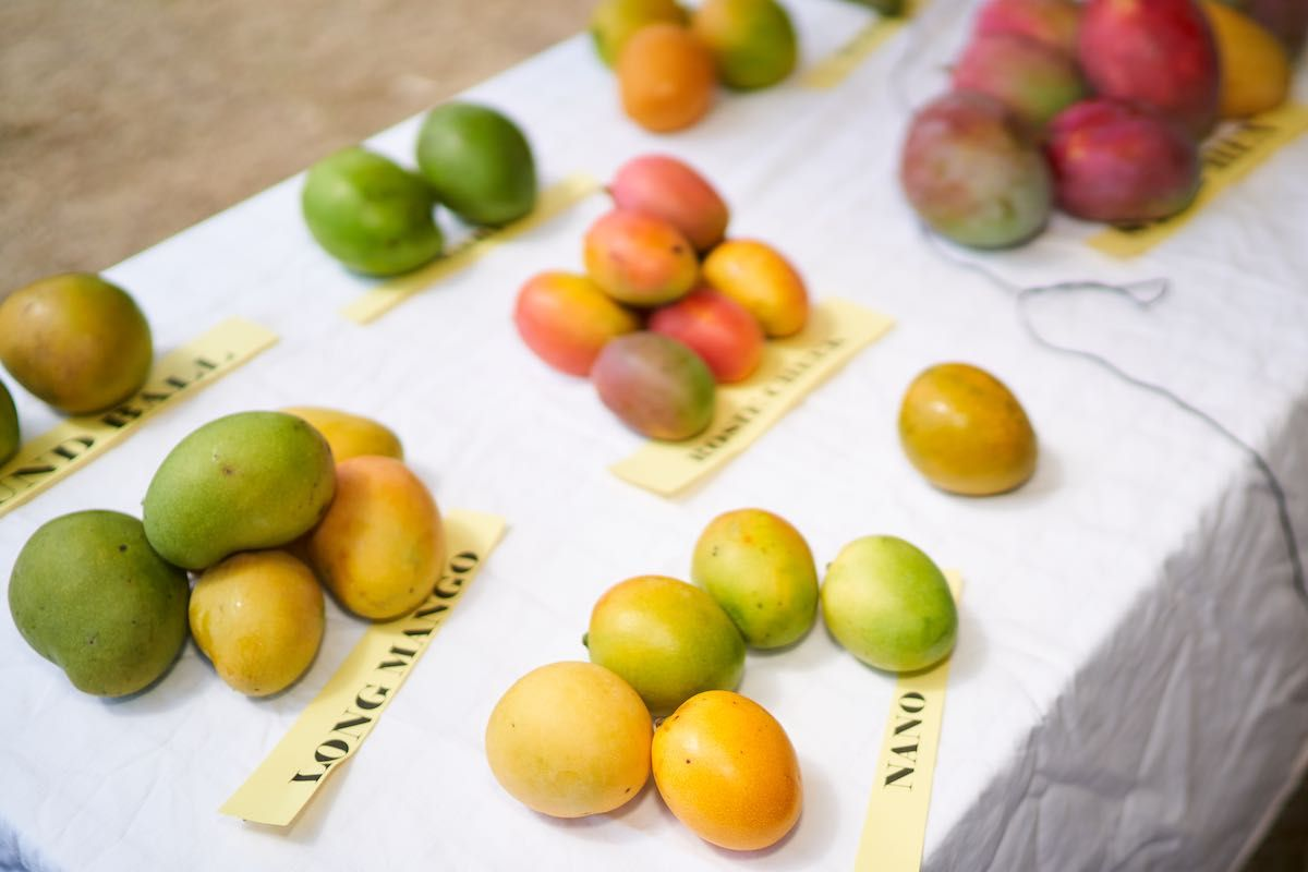 Nevis Mango Food Festival Nevismangofest Twitter Discover the latest trends in mango fashion, footwear and accessories. nevis mango food festival