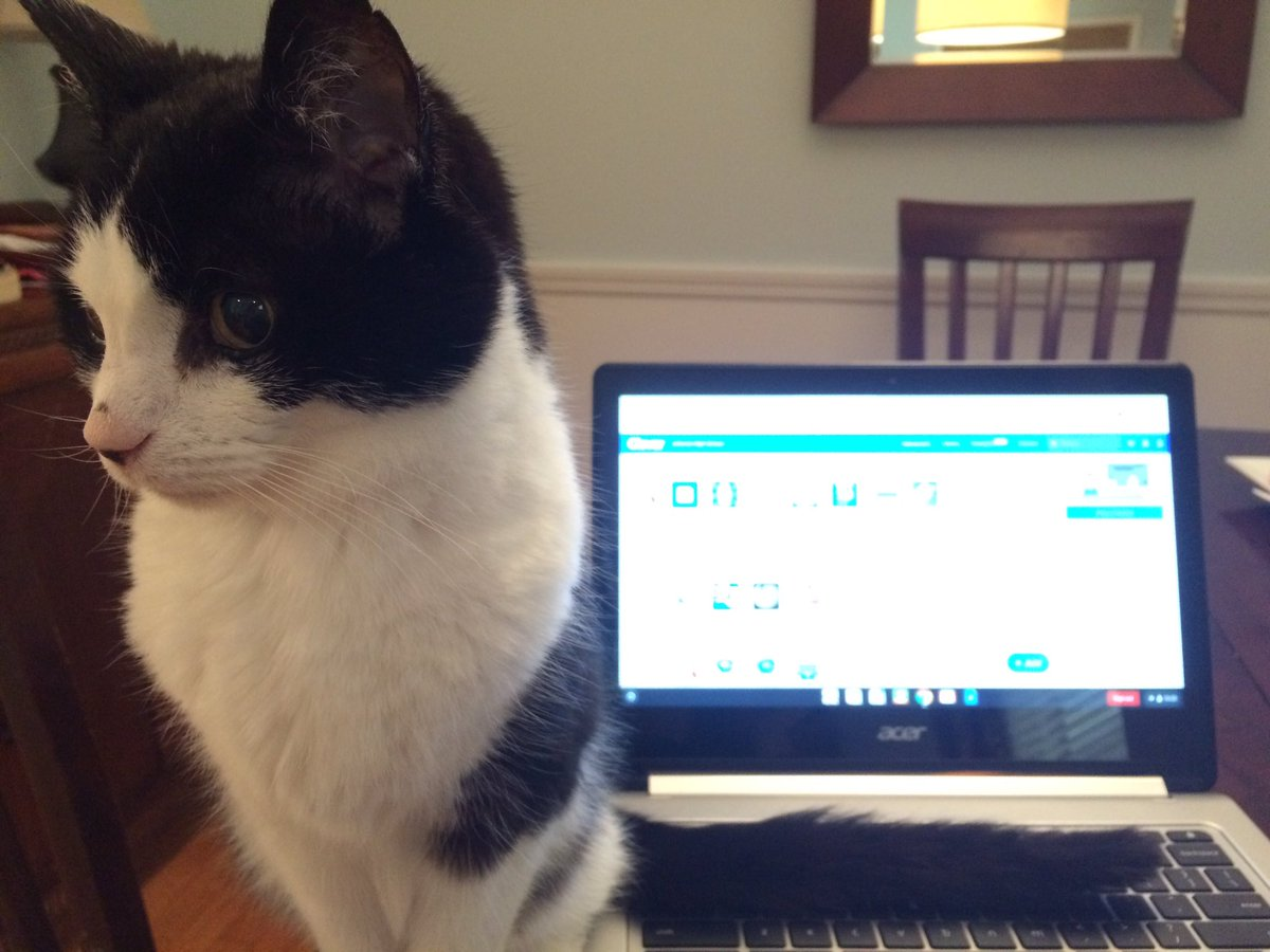 This cat is waiting for his own Clever account. Hope everyone's digital learning week is going well so far.