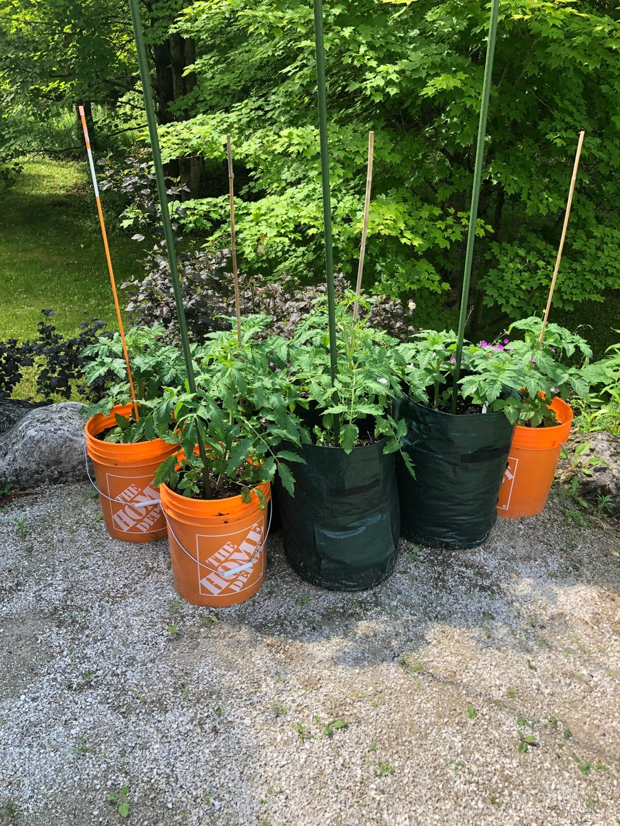 Solana Garden On Twitter Looking To Grow Your Own This Summer With Potting Mix And Some Clean Buckets Tomatoes Are A Satisfying Venture Into Gardening There Are Small Container Varieties But Most