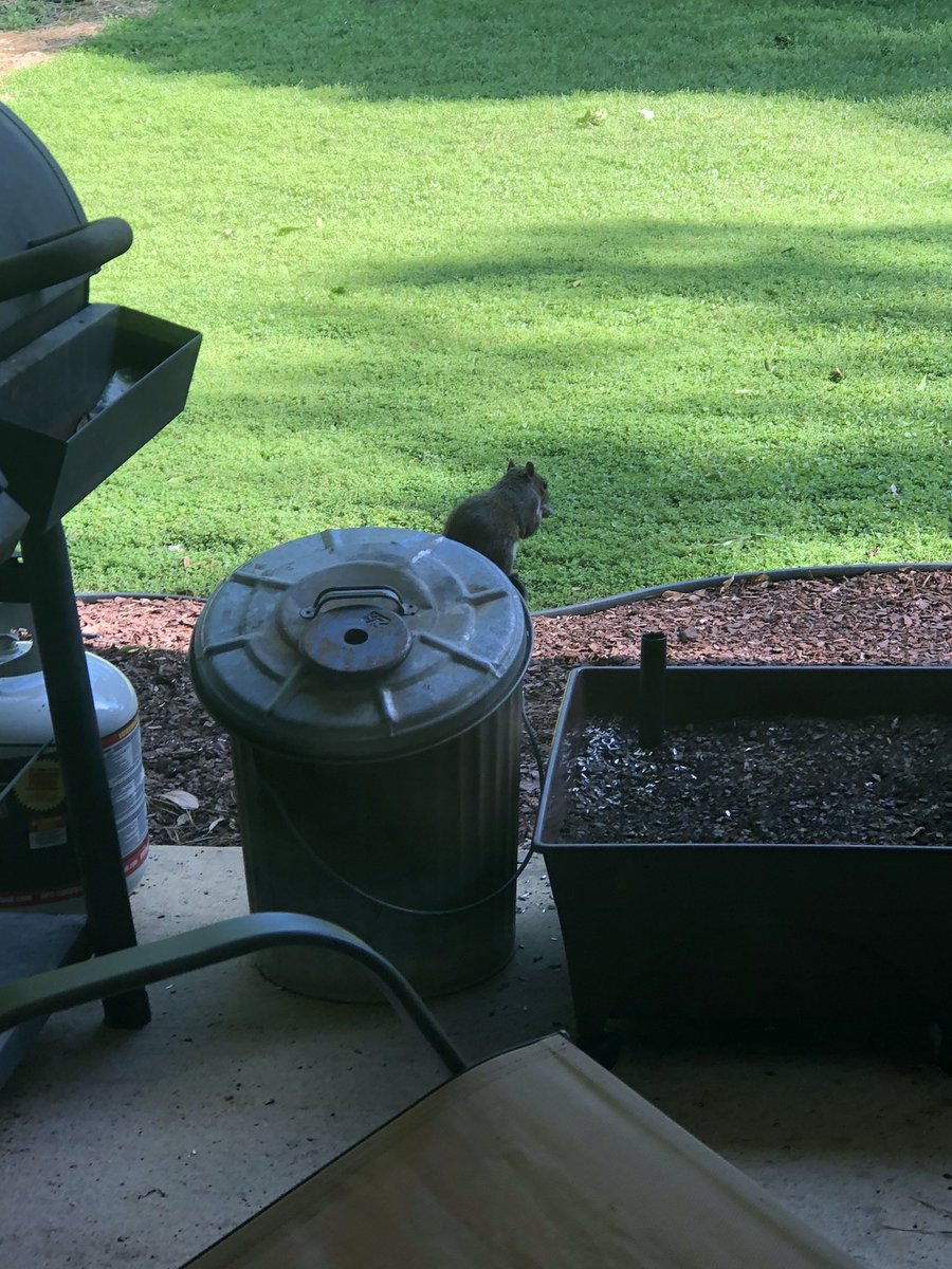 When the time comes, this little thief will be the first one in the pot.   #squirrelstew